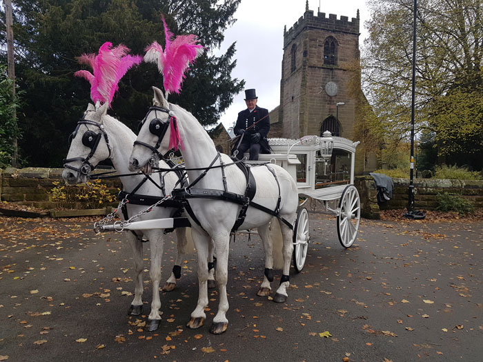 white horse drawn hearse as supplied by Sincerity Funerals Funeral Directors Wolverhampton